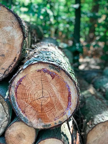 Regionales Holz für alle Projekte und Bereiche