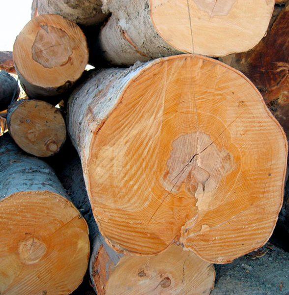 Dein Ansprechpartner für frisches Holz in Dresden